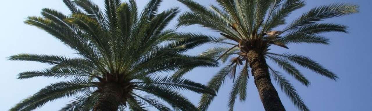 Duurzame palmolie levert winst op
