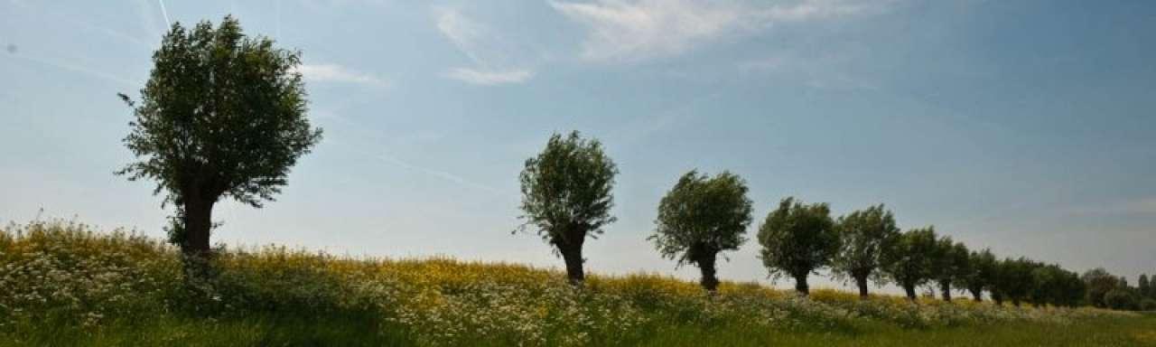 'Tweede generatie biobrandstoffen concurrerend in 2016'