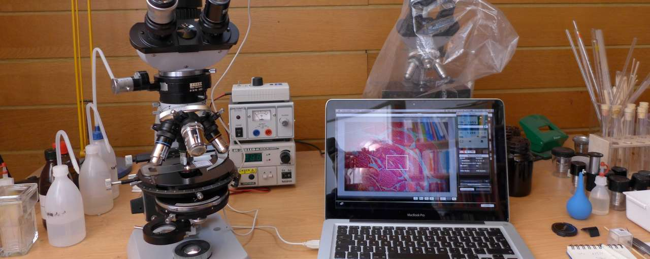 microscoop proefdieralternatief