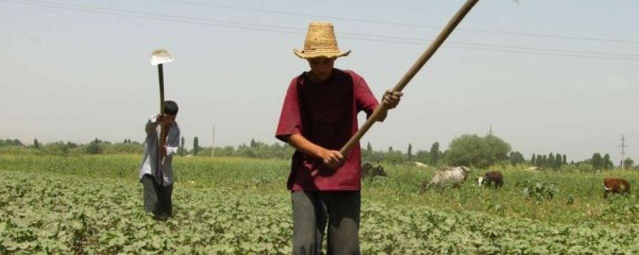 Kleding Jack & Jones voor 50% van duurzaam katoen