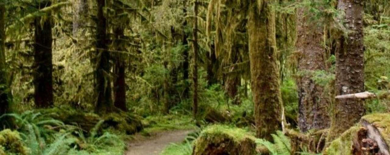 Marktaandeel duurzaam hout bijna verdubbeld