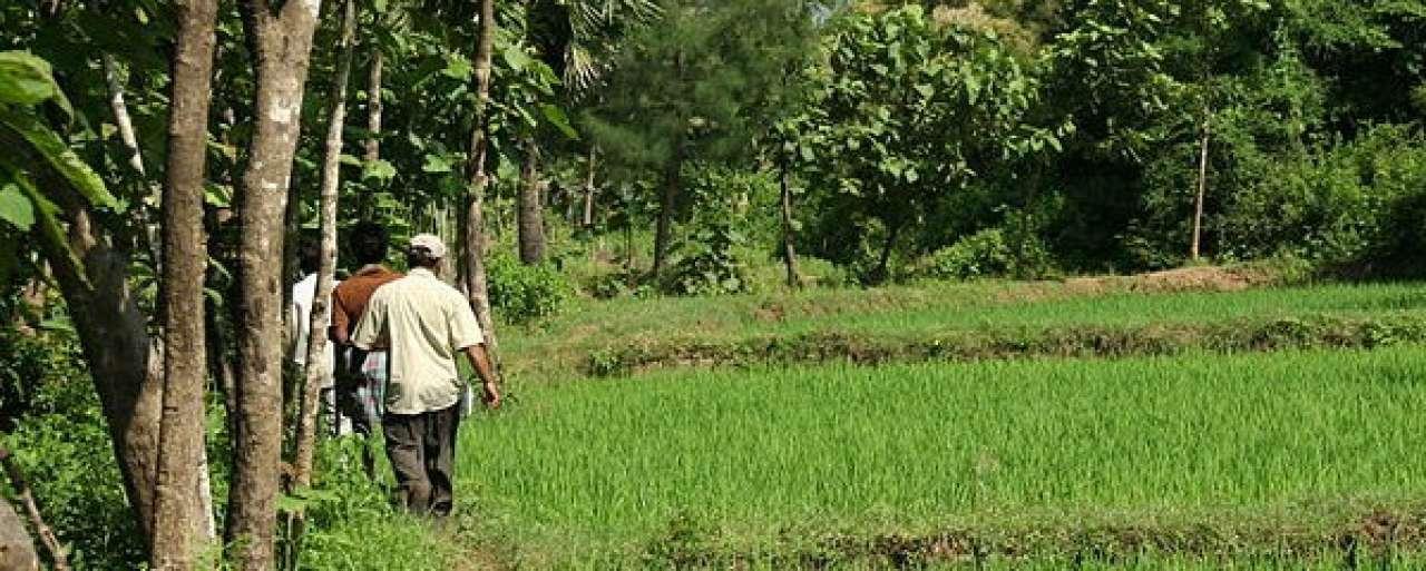 36% van agrarische grondstoffen Unilever duurzaam