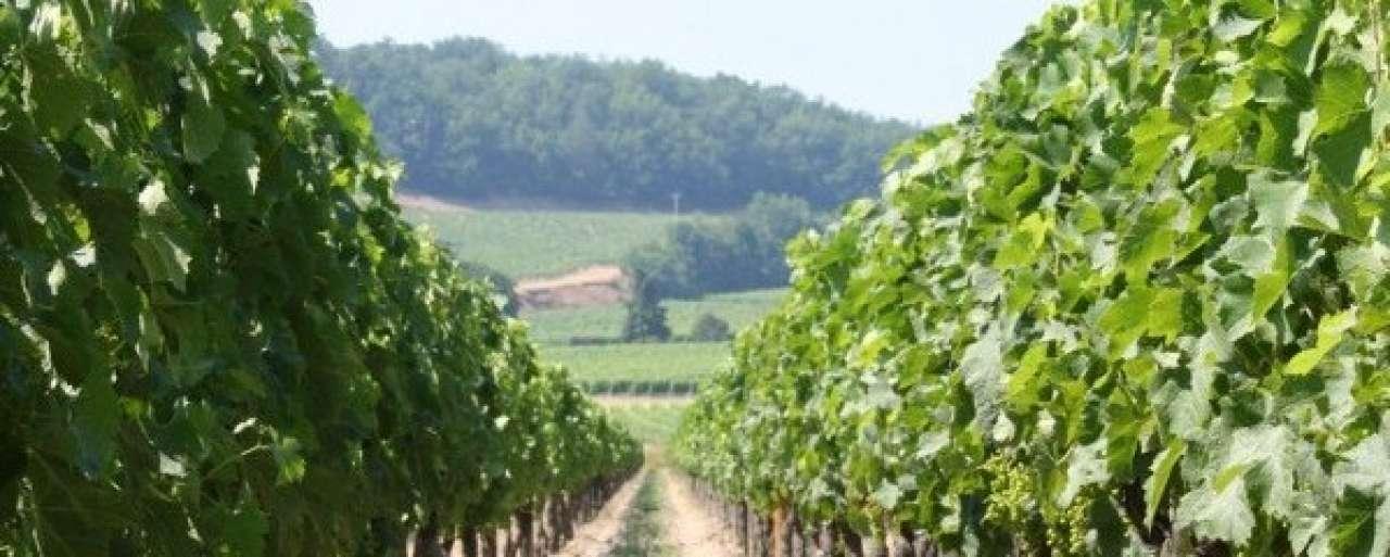 85% minder Bordeaux-wijn door klimaatverandering