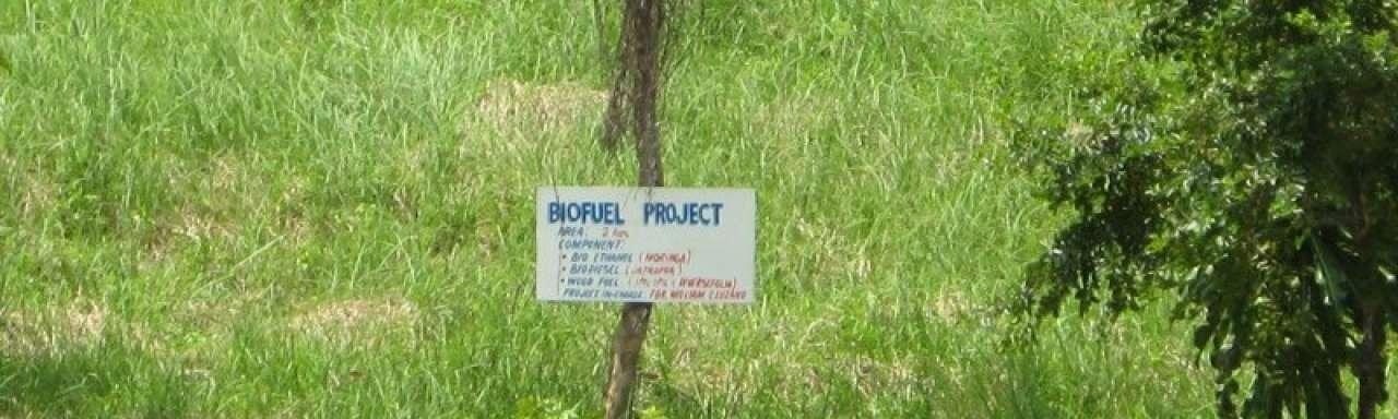 Groene denktank: Miljardensteun biobrandstof ineffectief