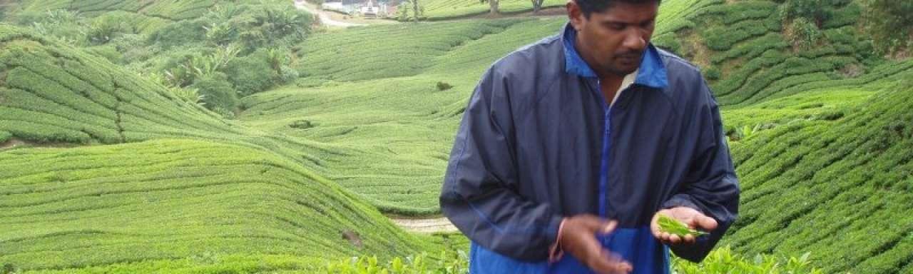 Rank a Brand: 'Duurzame koffie en thee steeds gangbaarder'