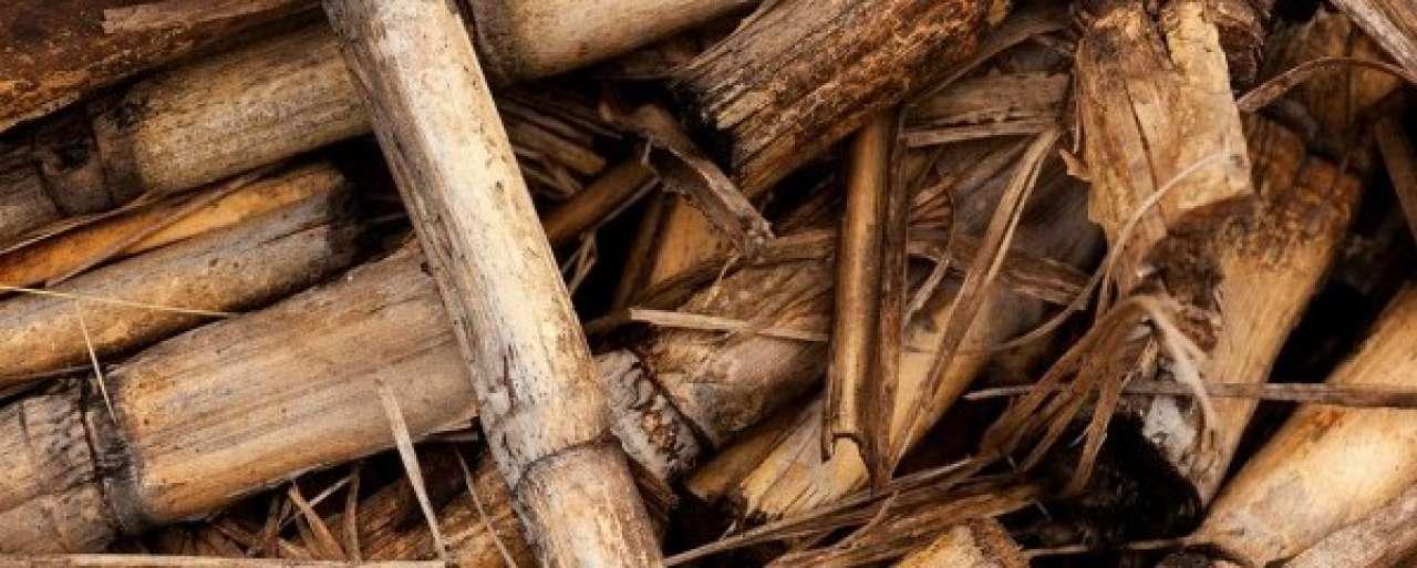 Kamp neemt 24 belemmeringen voor biobased economy weg