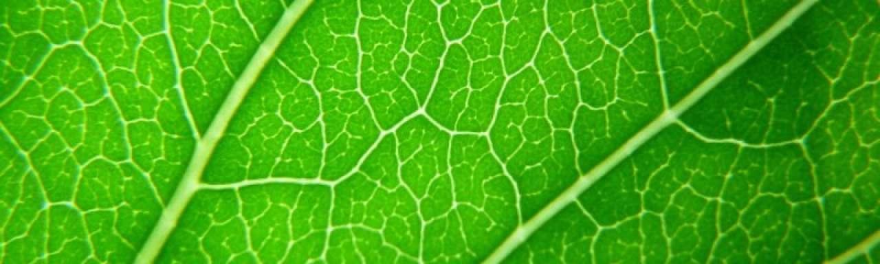Plantencellen sleutel tot super efficiënte zonnepanelen