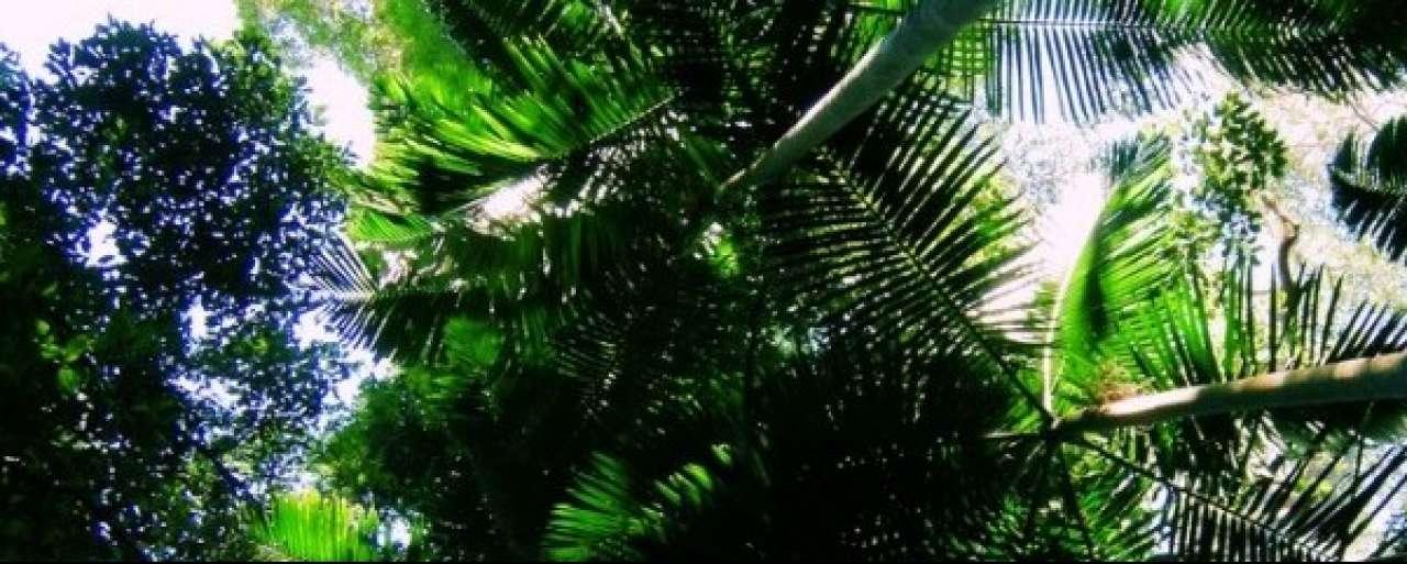 Nederland op weg naar 100% duurzame palmolie