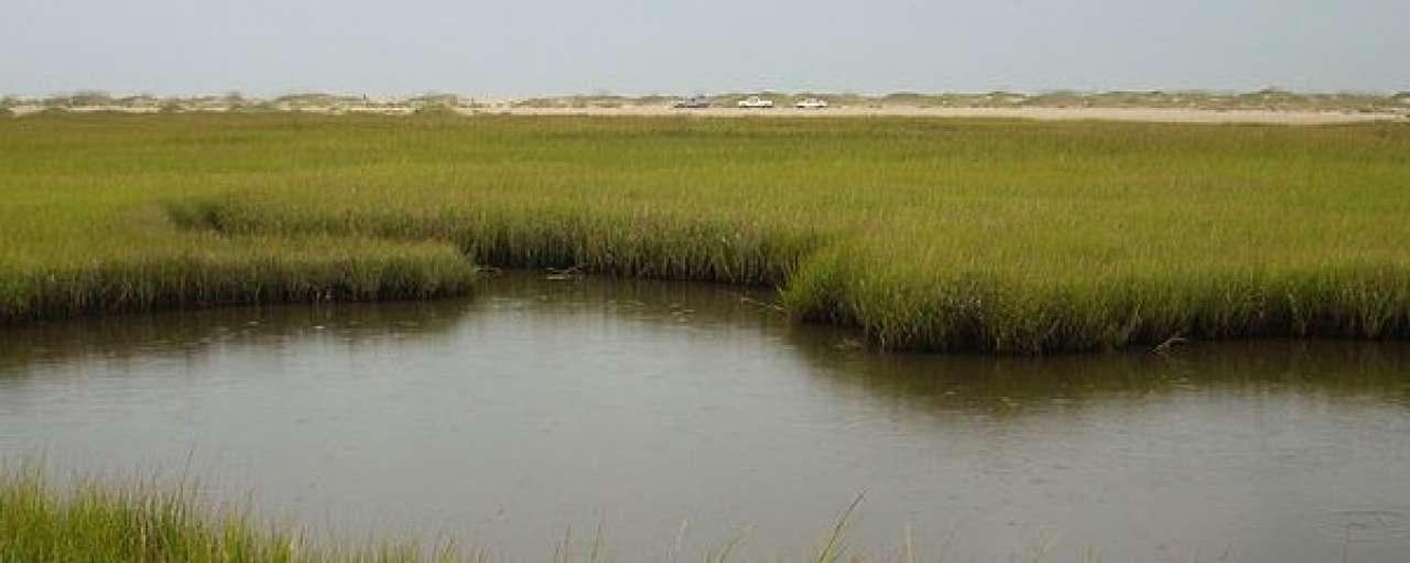 Commercieel moeras zuivert afvalwater oliewinning