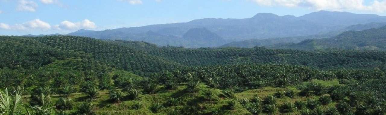 Unilever wint prijs voor inspanningen duurzame palmolie