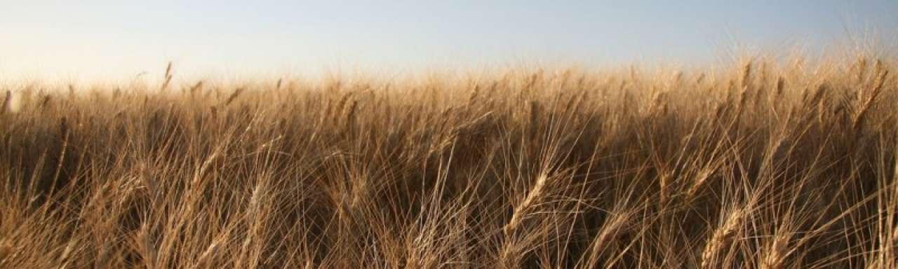Europese voedselproductie kan niet verder groeien