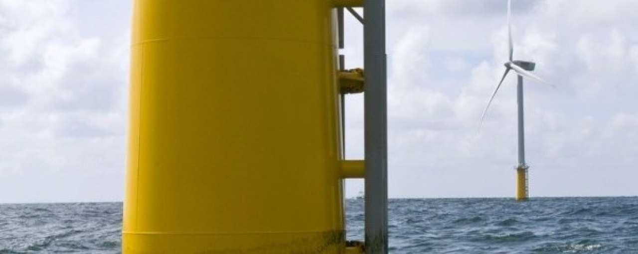 Grootste Nederlandse windpark op zee blijkt vol leven