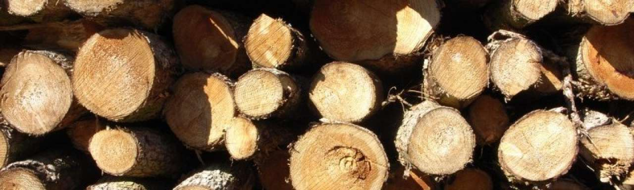 PBL: 'Houtkap voor bio-energie leidt tot meer CO2'