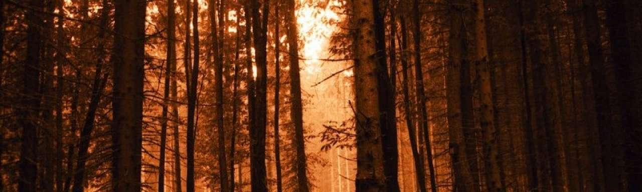 CO2-opname oude bossen Europa lager dan gedacht