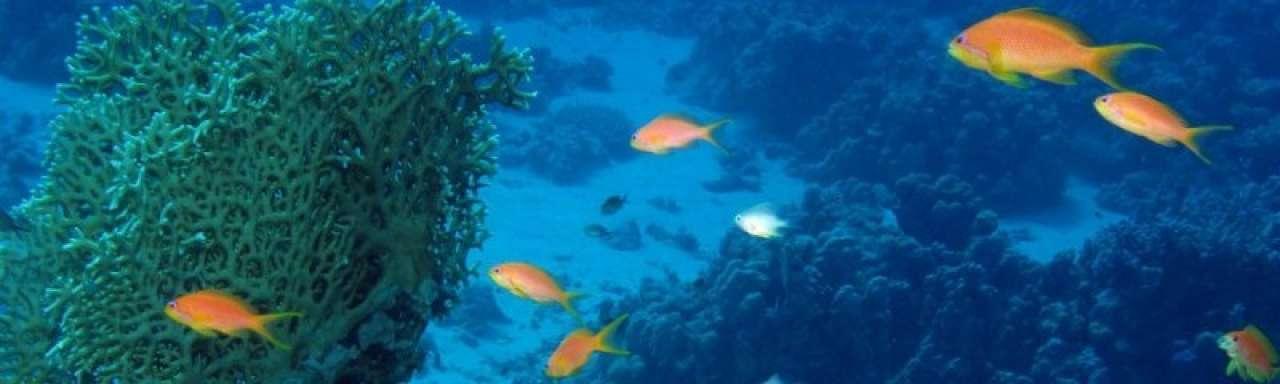 Verzuring oceanen leidt tot opwarming klimaat