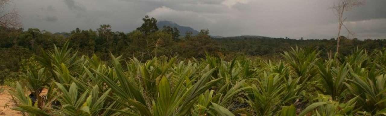 Steeds meer palmolie als brandstof in Europese auto's