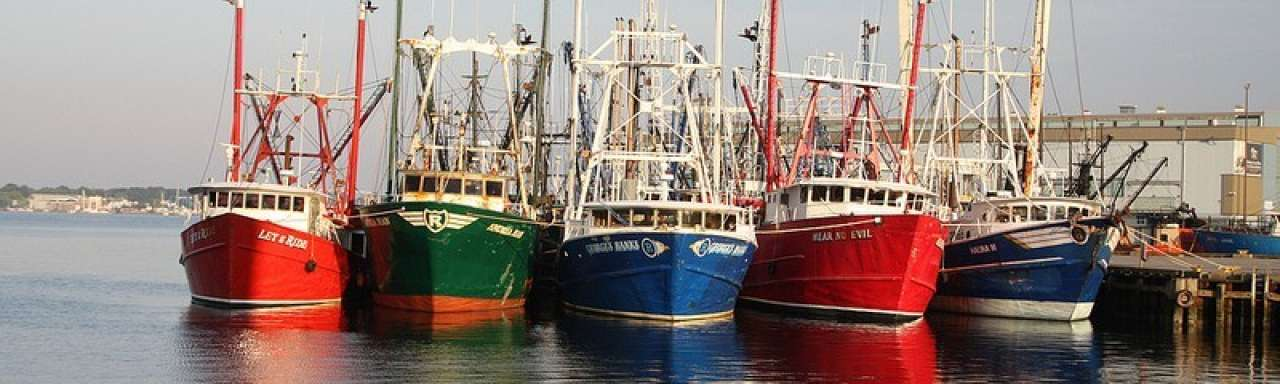 'Beter beheer visbestand levert miljarden op'