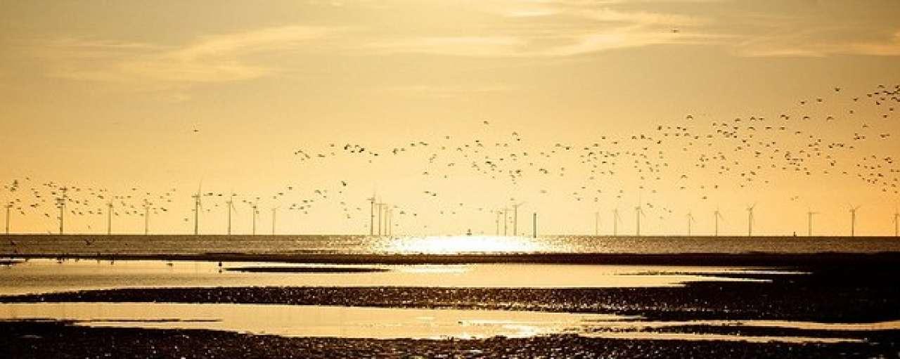 Windmolens niet in top 10 oorzaken vogelsterfte
