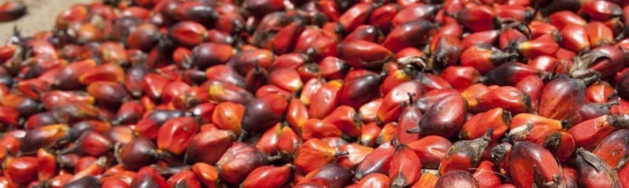 Forse stap Unilever naar meer transparantie over omstreden palmolie