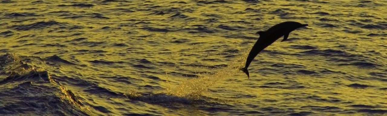O-foil stuwt schepen voort als een dolfijn