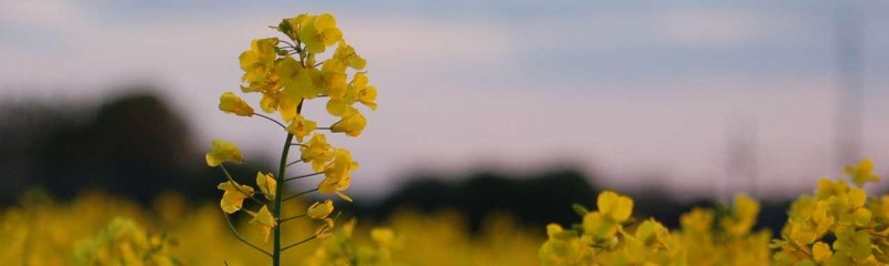 EU: Toename van omstreden biobrandstoffen