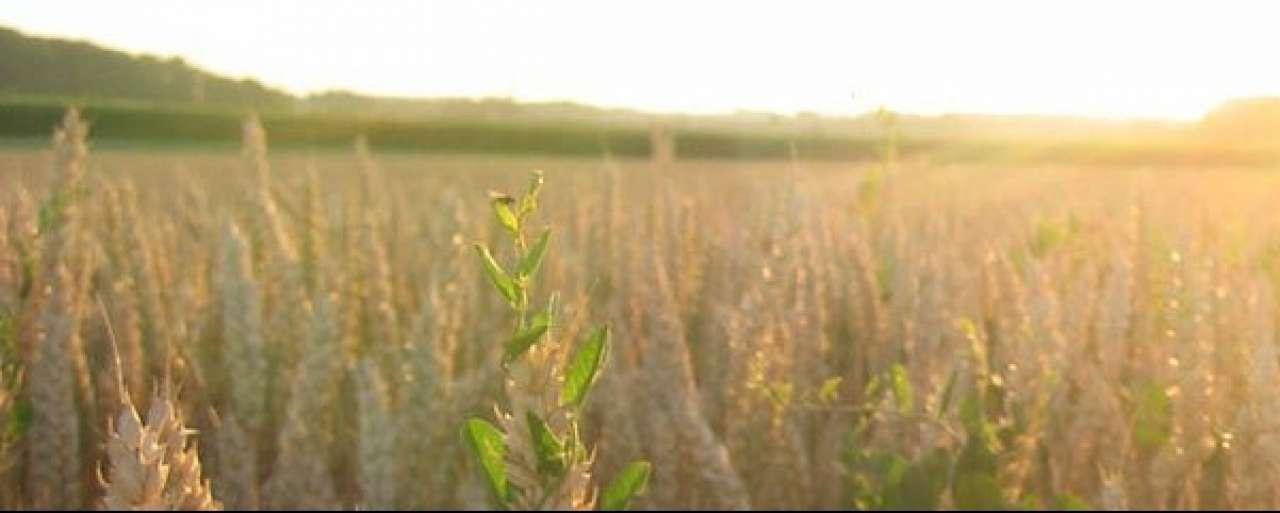 Europees beleid biobrandstoffen 'pure waanzin'