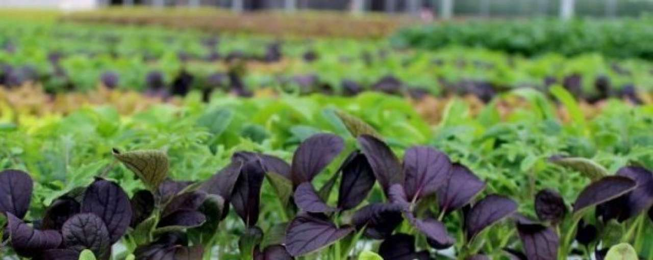 Lokale boer krijgt miljoeneninvestering