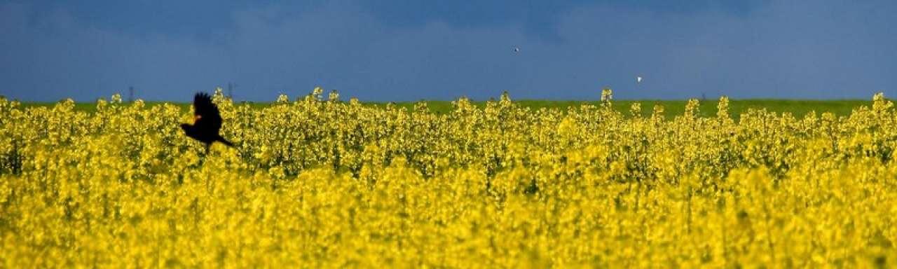 Biobenzine voor commerciële productie ontwikkeld