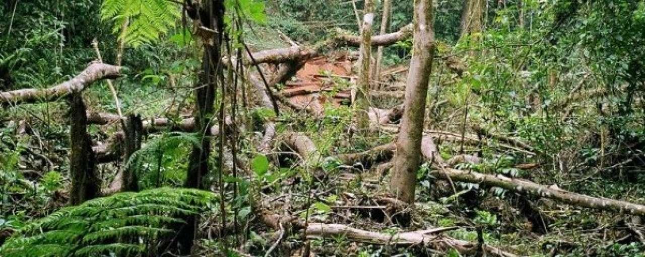 Google Earth ingezet bij opspeuren van illegale houtkap