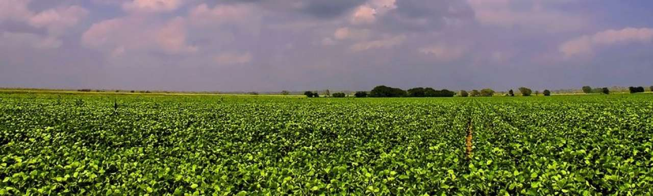 Duurzame soja rendabel voor Zuid-Amerikaanse boeren