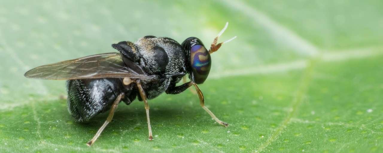 duurzame insecten