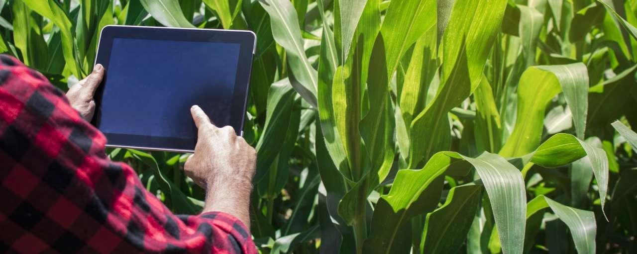 landbouw internet of things