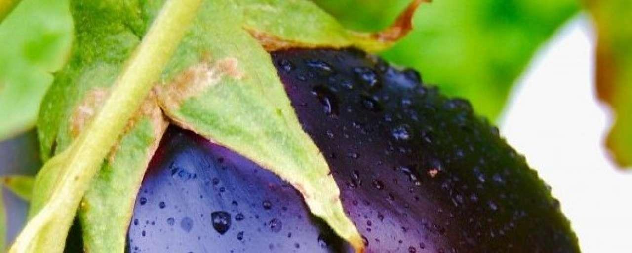 Bouwen met aubergines: 5 keer innovatieve bouw