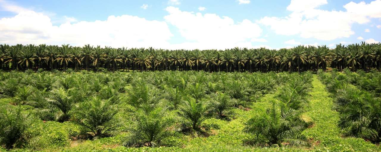 duurzame palmolie