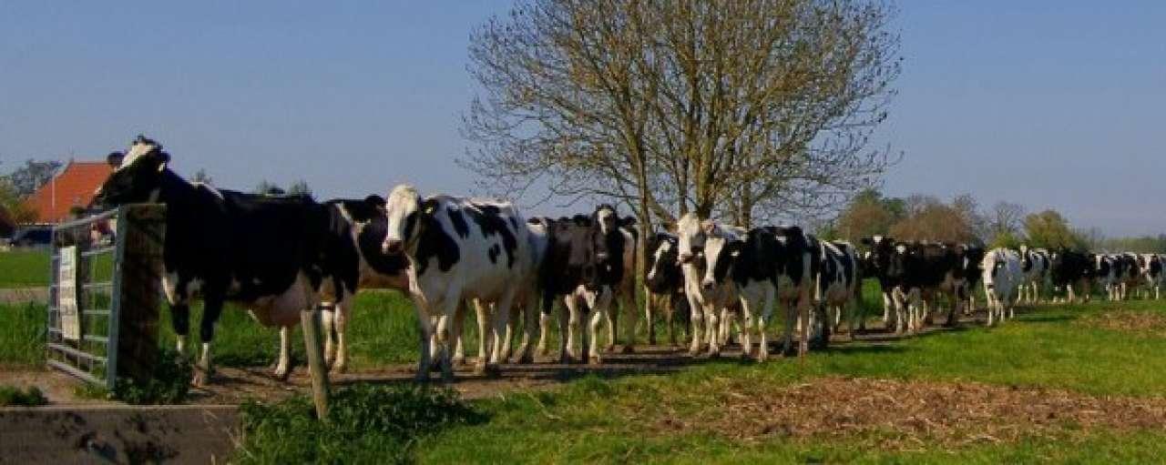 Duurzame veeteelt verbetert opbrengst in Gelderland, Utrecht