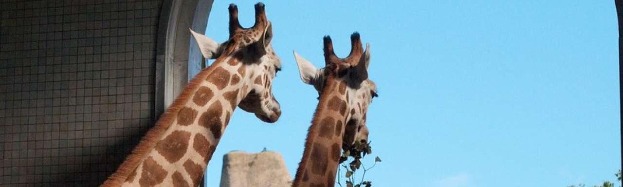 Energie uit poep in de London Zoo