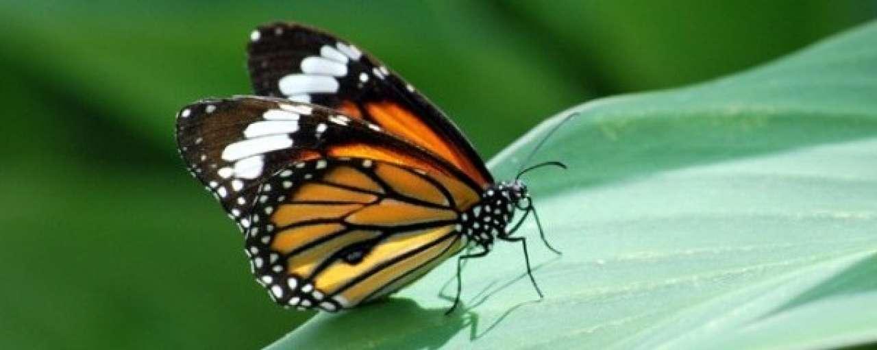 Vlinderzonnepaneel kleurt met de omgeving
