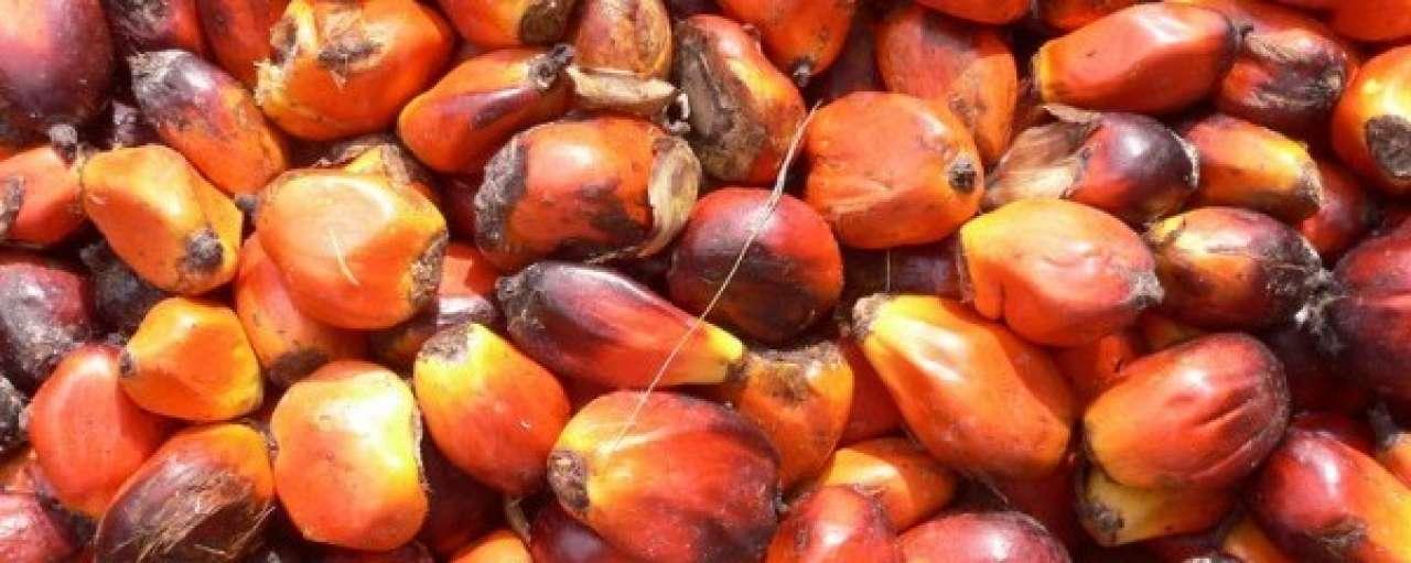 Cargill zet stap(je) richting duurzame palmolie