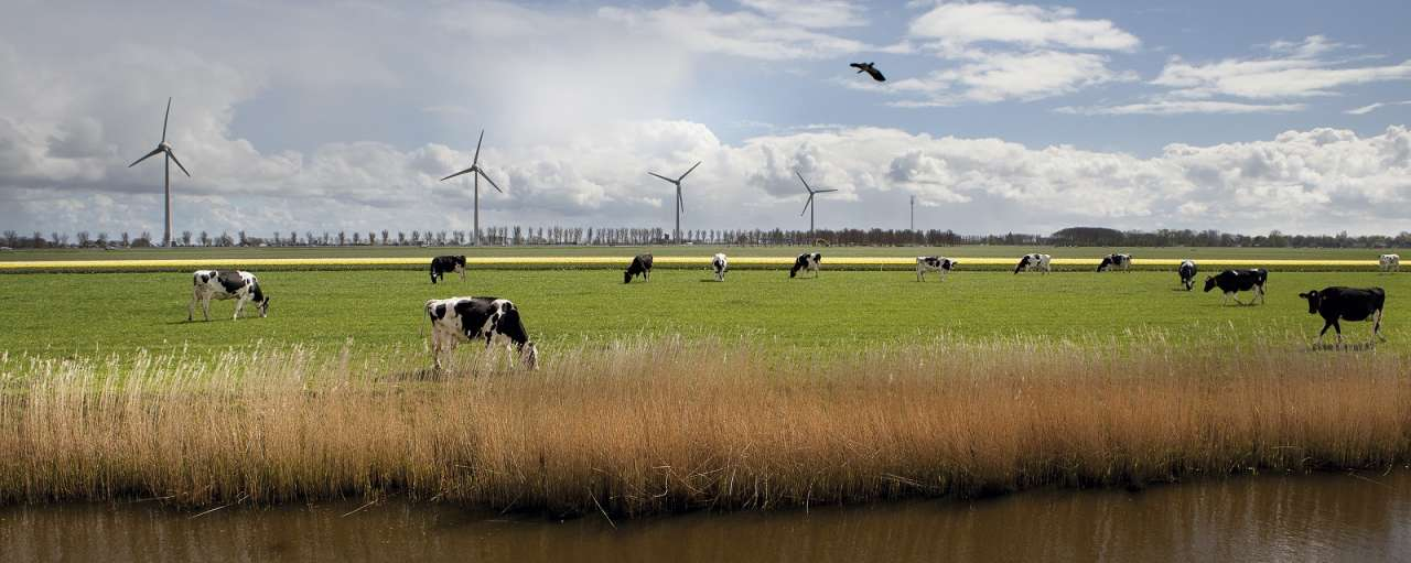 frieslandcampina zonnepanelen