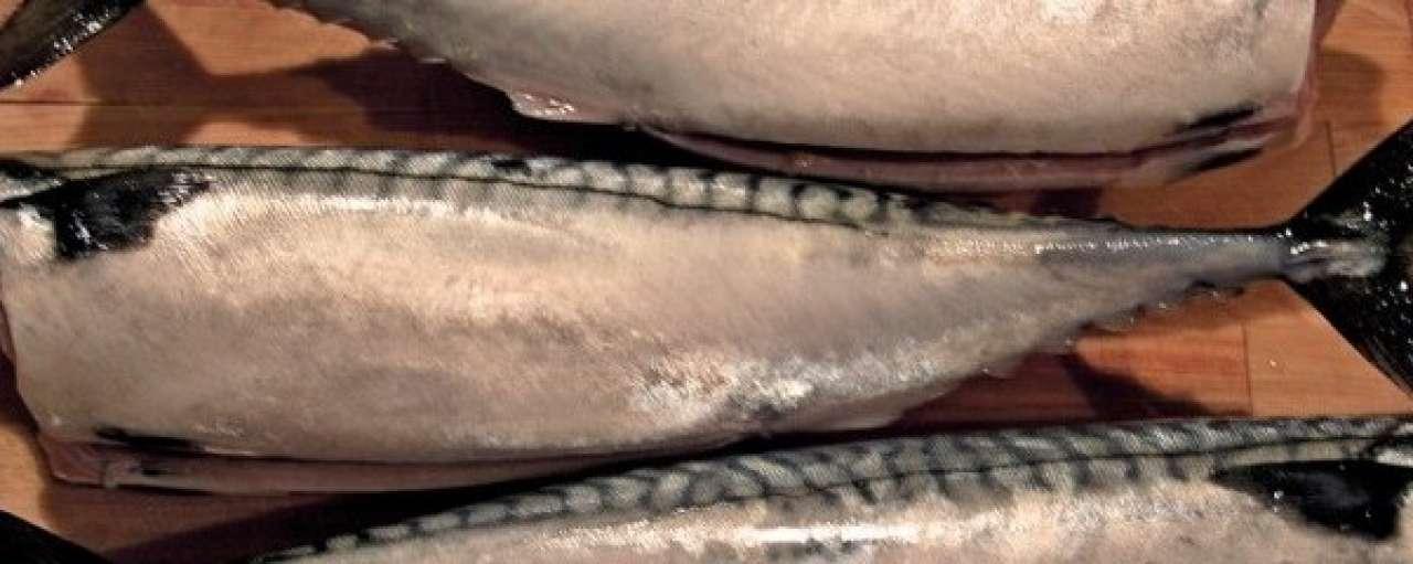 Visquota Nederland verlaagd door overbevissing