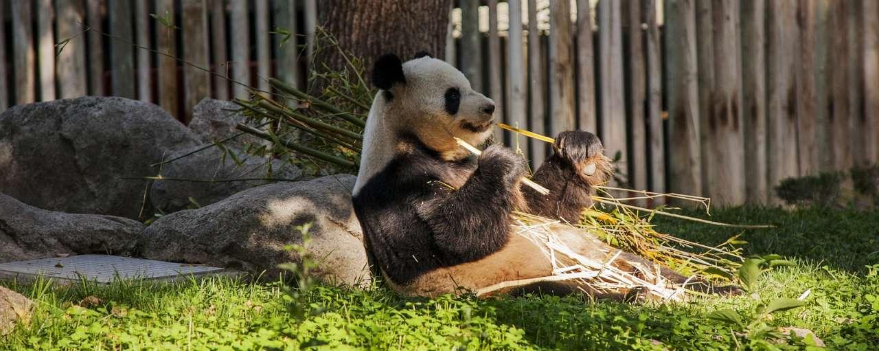 panda duurzame palmolie