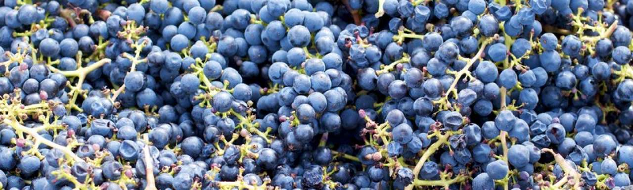 Van afvalvijver naar duurzame wijnboerderij