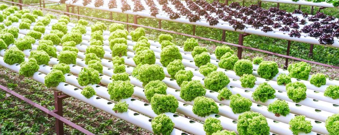 whitepaper duurzame voeding