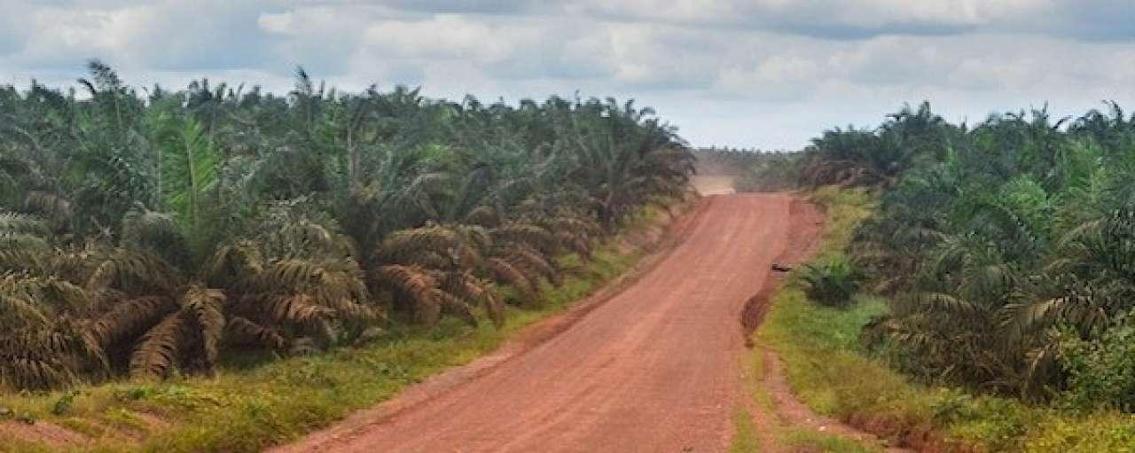 ConAgra gebruikt in 2016 duurzame palmolie