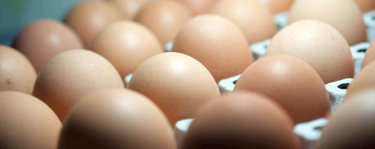 nestle eieren