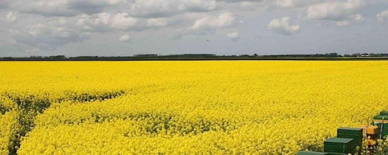 'Koolzaad niet geschikt als biodiesel'