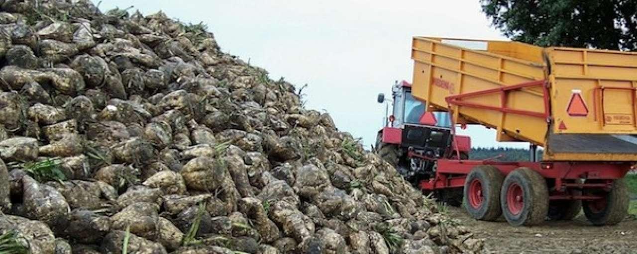 Nederland sterk in biobased grondstoffen