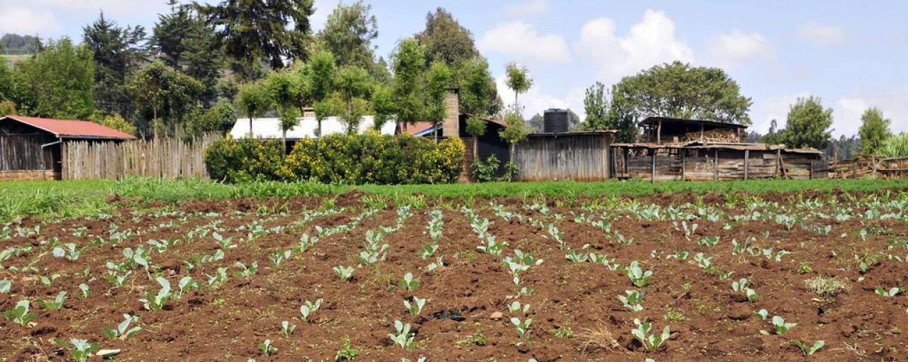 biologische landbouw gewasbescherming