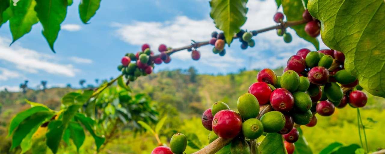 duurzame koffiebeker