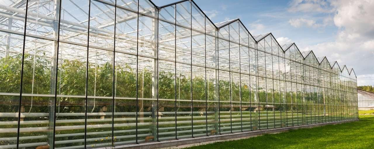 glastuinbouw warmtecoöperatie